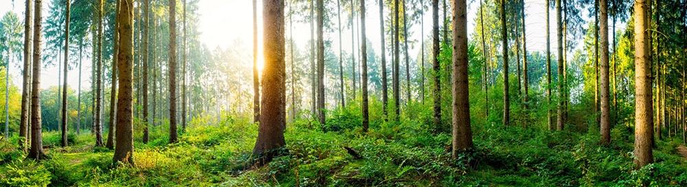 Es ist ein saftig grüner Wald zu sehen