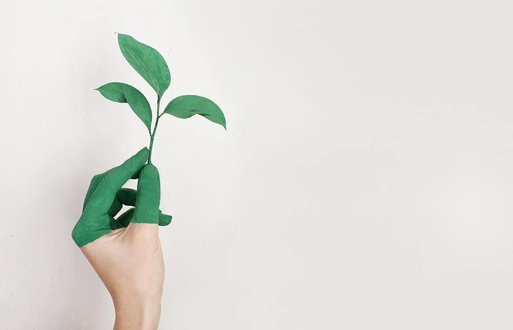 Eine Hand hält eine kleine Pflanze, die Hälfte der Finger ist mit der Farbe der Pflanze benetzt