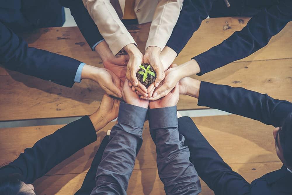 Mehrere Hände halten gemeinsam Erde mit einer wachsenden Pflanze